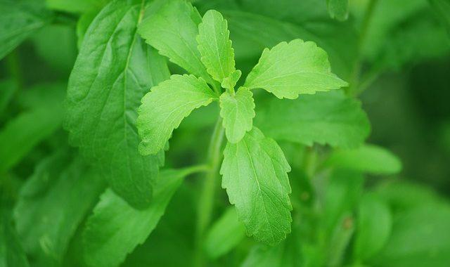 la stevia è un dolcificante naturale senza calorie