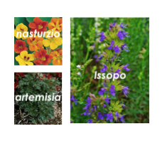 giardino e orto bio - sinergie di piante e oli essenziali
